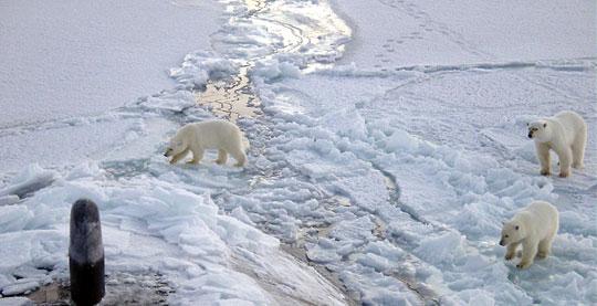 Bắc Cực tan băng khiến mùa đông lạnh hơn