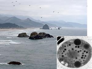 Phát hiện chủng virus lớn, phức tạp nhất thế giới