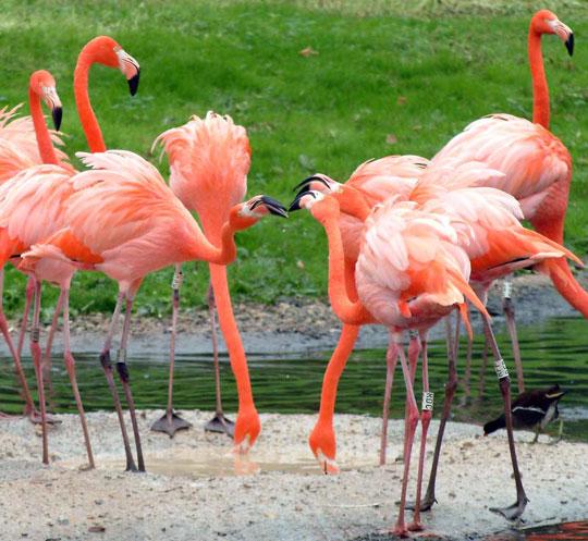 Chim cũng biết làm đẹp