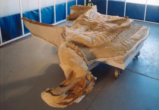 Phát hiện hóa thạch khủng long hoàn chỉnh nhất