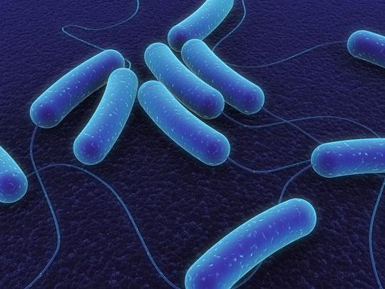 Vén bức màn bí mật về hệ miễn dịch của vi khuẩn