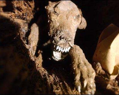 Peru phát hiện 6 xác ướp của chó có từ thế kỷ 15