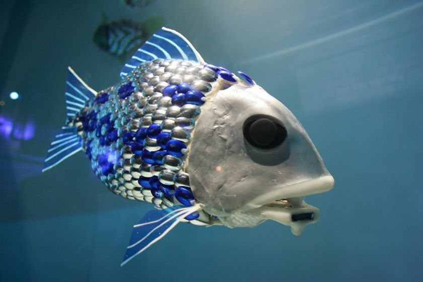Cá robot cứu đàn cá thật thoát vùng ô nhiễm dầu tràn