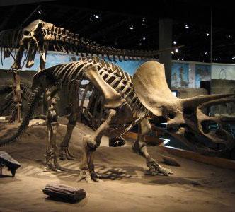 Phát hiện phôi khủng long niên đại 190 triệu năm