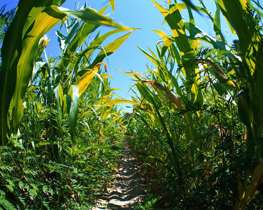 Nhiên liệu sinh học làm tăng khí thải nhà kính