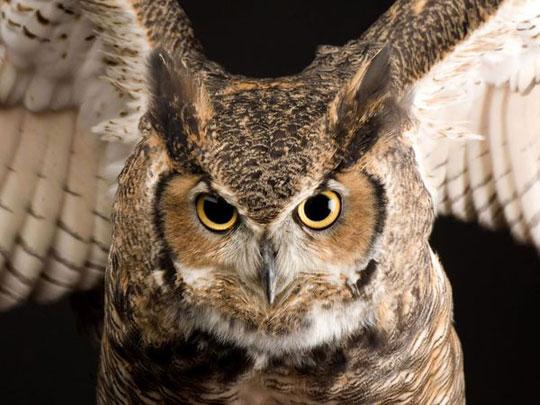 Những ánh mắt 'sắc lẹm' của động vật