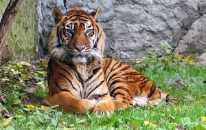 Việt Nam dự hội nghị thượng đỉnh bảo tồn loài hổ