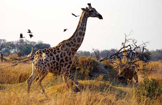 Top ảnh động vật tham gia thi ảnh của Natioanal Geographic