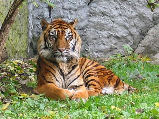 Lãnh đạo thế giới nhóm họp vì hổ