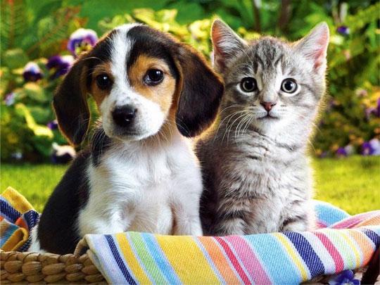 Vì sao chó thông minh hơn mèo?