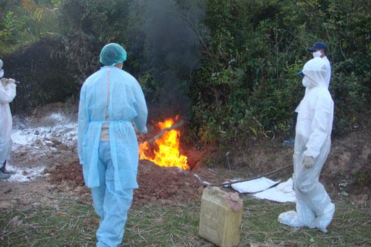 ADB giúp Việt Nam kiểm soát các bệnh truyền nhiễm