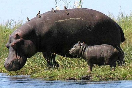 Phát hiện mới về vóc dáng của loài động vật có vú