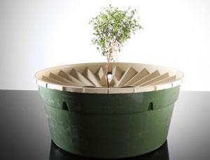 Ươm cây không cần tưới nước