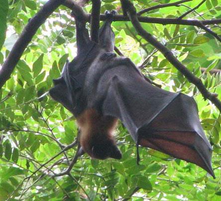 Khám phá bí ẩn về thế giới động vật