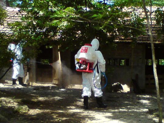 Tăng cường công tác phòng, chống dịch cúm gia cầm