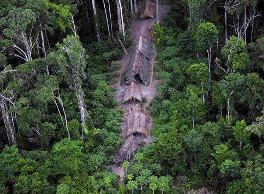 Rừng nhiệt đới từng biến mất 300 triệu năm trước