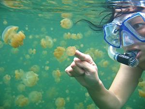 """Biển trong tương lai sẽ thành """"thế giới loài sứa"""""""