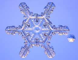 Những bông tuyết