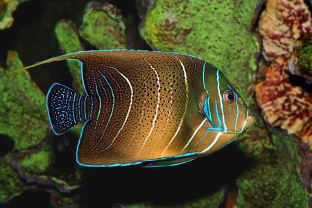 Một số loài cá thuộc vùng biển châu Phi