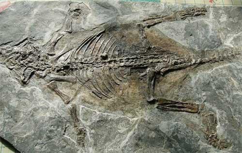 Những hóa thạch của loài Khủng long