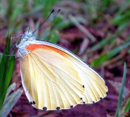 Những cánh bướm mỏng manh