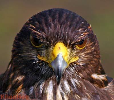 Loài chim nghĩ gì và hành động ra sao?