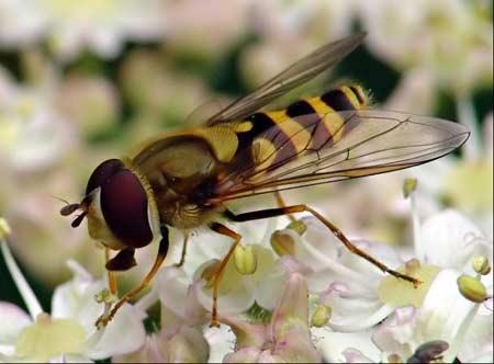 Sức mạnh côn trùng