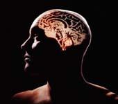 Sóng Wi-Fi có hại đối với não