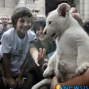 Nhóc sư tử trắng đầu tiên ở Nam Mỹ