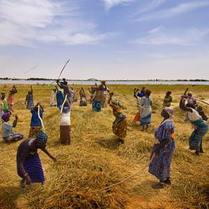 Nông nghiệp xanh ở châu Phi