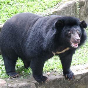 Phim quảng cáo bảo vệ gấu