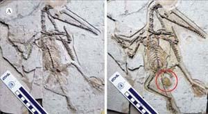 Phát hiện hóa thạch khủng long cùng trứng