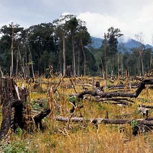 Việt Nam đang mất dần sự đa dạng sinh học