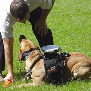 Điều khiển chó từ xa