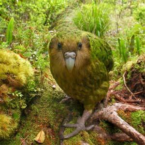 Chùm ảnh: Những loài chim quý hiếm nhất trên thế giới