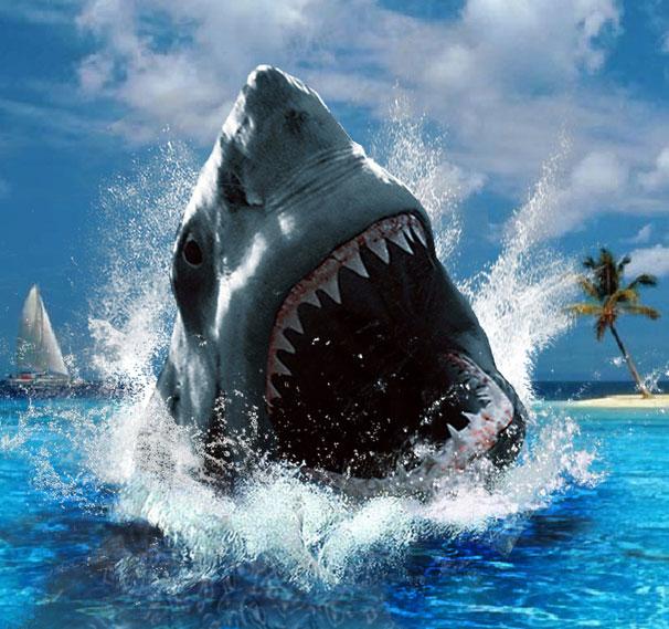 Một con cá mập có thể sở hữu tới 3000 chiếc răng