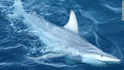 Cá mập biến đổi gene tung tăng trên Thái Bình Dương