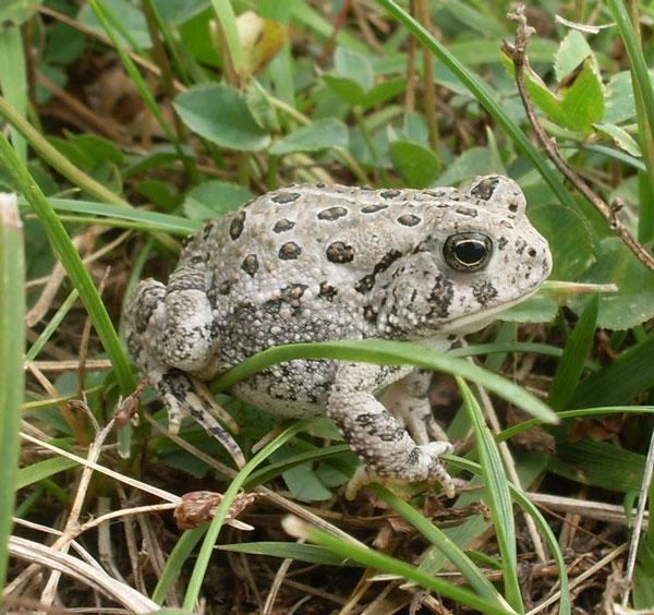 Giải mã tình ca loài ếch