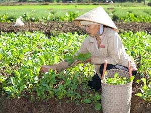 Mô hình sản xuất nông sản bằng phân hữu cơ vi sinh