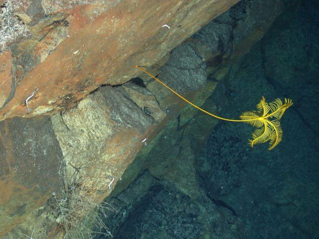 Phát hiện chấn động về 20 loài sinh vật lạ ở Nam Cực