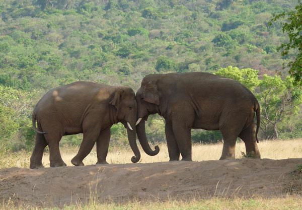 10 loài có nguy cơ tuyệt chủng năm 2012