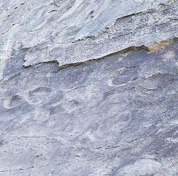 Phát hiện vài trăm dấu chân khủng long ở Bắc Kinh