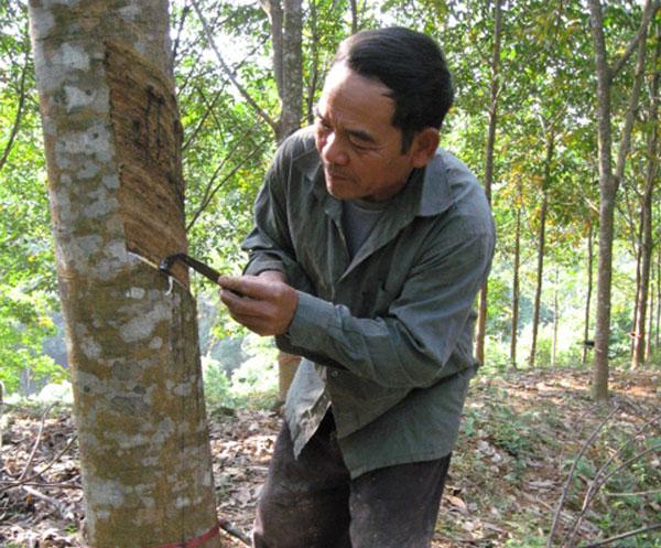 Hợp tác Việt Nam-Nhật Bản trong chế biến cao su