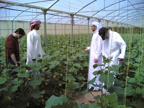 Biến sa mạc thành đất trồng