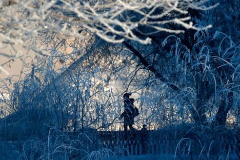 Rừng cây bị tuyết phủ dày