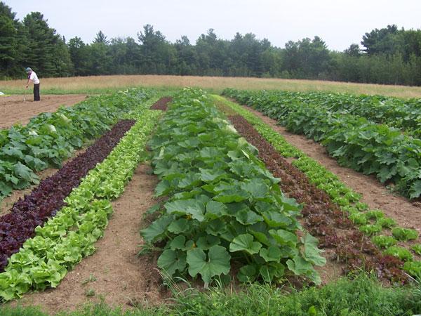 Xông hơi sinh học thay thế MBr trong nông nghiệp