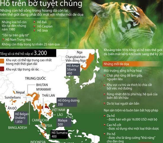 Indonesia: Lại thêm một con hổ Sumatra bị giết