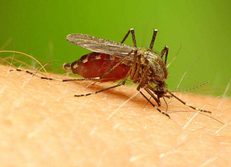 Bệnh sốt rét có nguy cơ bùng phát tại châu Phi do thuốc giả