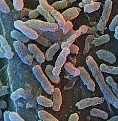 Vi khuẩn giúp người trường sinh