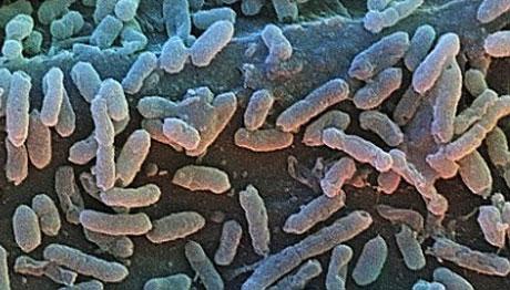 Vi khuẩn Bacillius F trong băng vĩnh cửu.